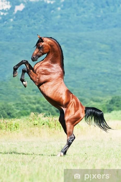 Nálepka Pixerstick Bay arabská hřebec chovu - Témata