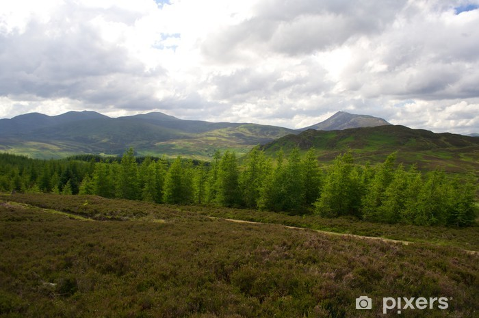 Fototapeta winylowa Perthshire Las, Szkocja - Krajobraz wiejski