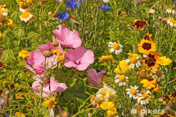 Naklejka Pixerstick Kolorowy kwiat łąka - Kwiaty