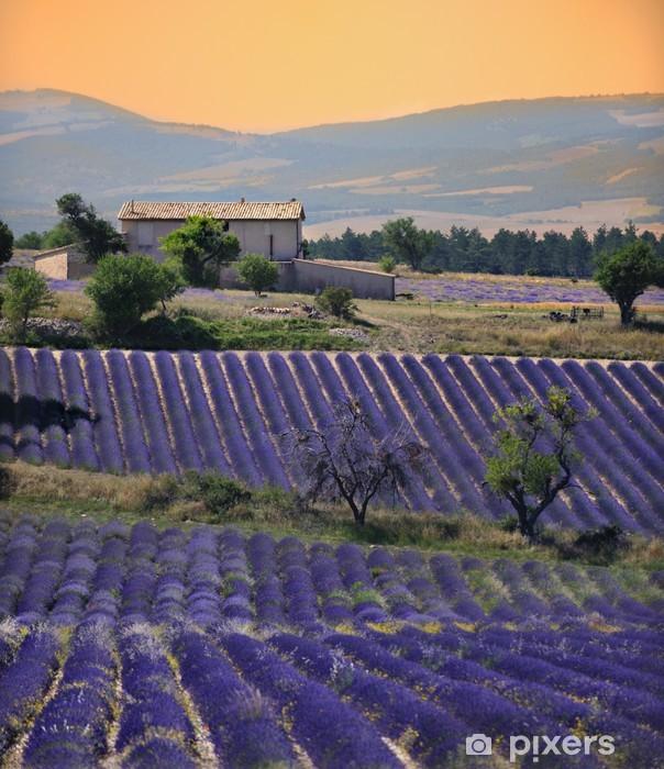 Papier peint vinyle Maison fils DANS champs de lavande - Thèmes