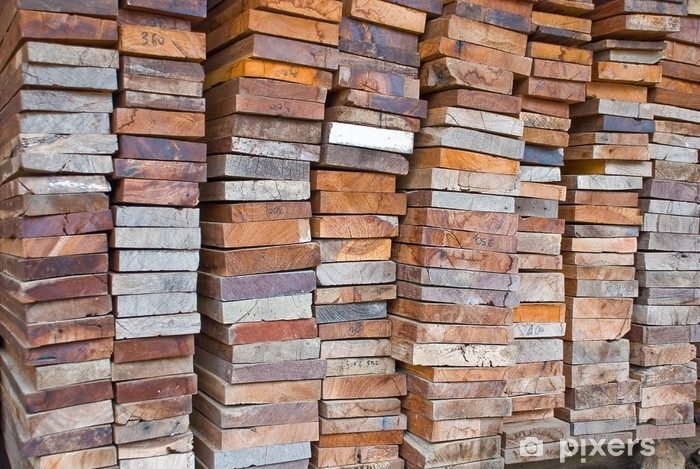 Naklejka Pixerstick Wood sklep - Drzewa
