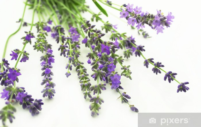 Sticker Pixerstick Lavande - Fleurs