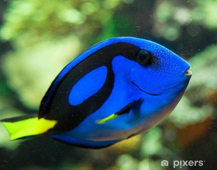 Nálepka Pixerstick Modrá tang fish - Vodní sporty
