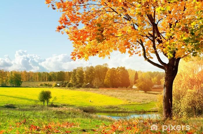 Fototapeta winylowa Jesień w parku rano - Tematy