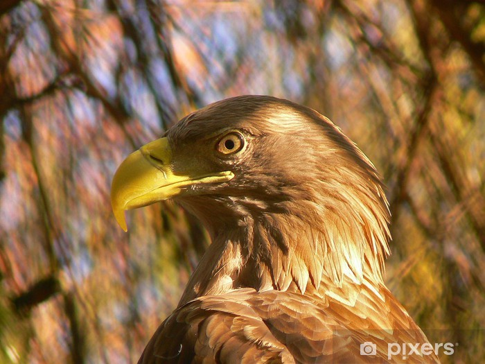 Vinyl-Fototapete Goldener Adler - Themen