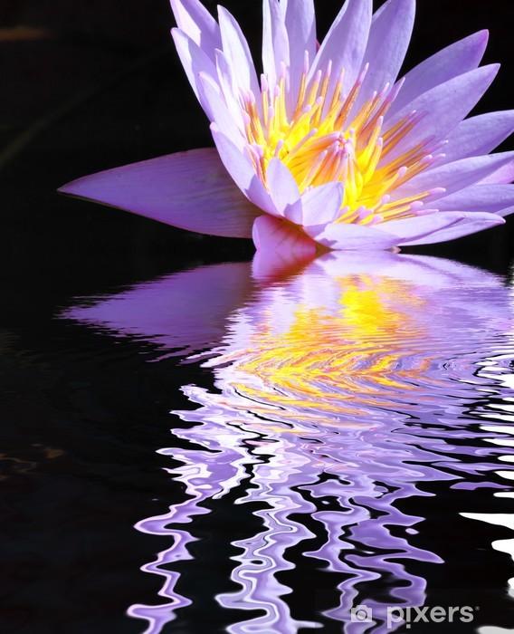 Fototapeta winylowa Fioletowy kwiat lilii refleksje - Kwiaty