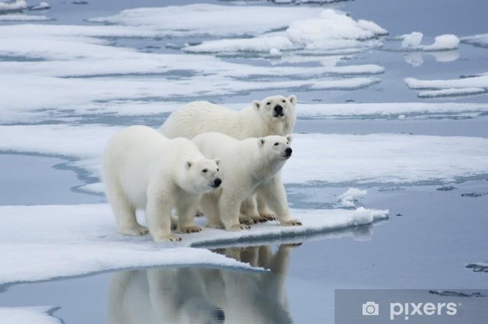 Sticker Pixerstick Polar Bear Cubs & Yearling - Thèmes