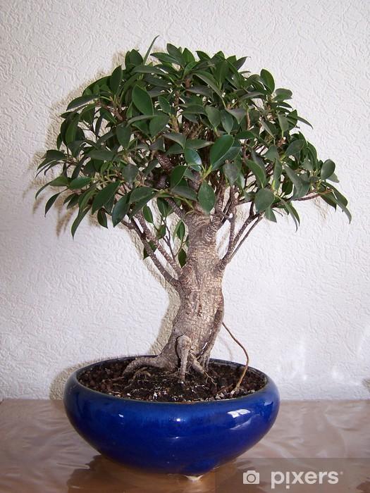 Papier peint vinyle Ficus bonsaï - Arbres