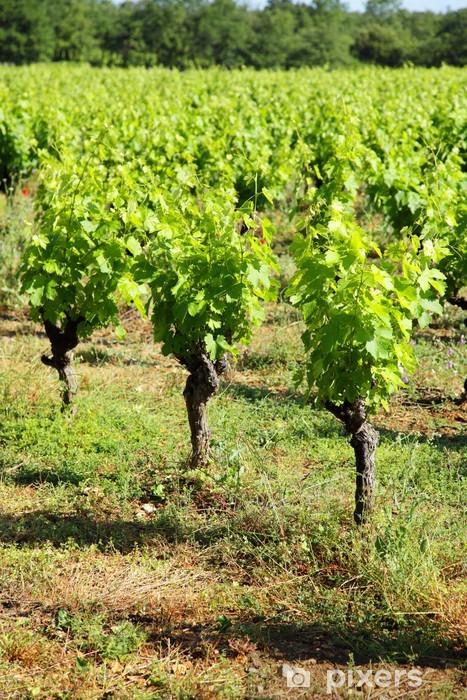 Fototapeta winylowa Grape krzak - Rośliny