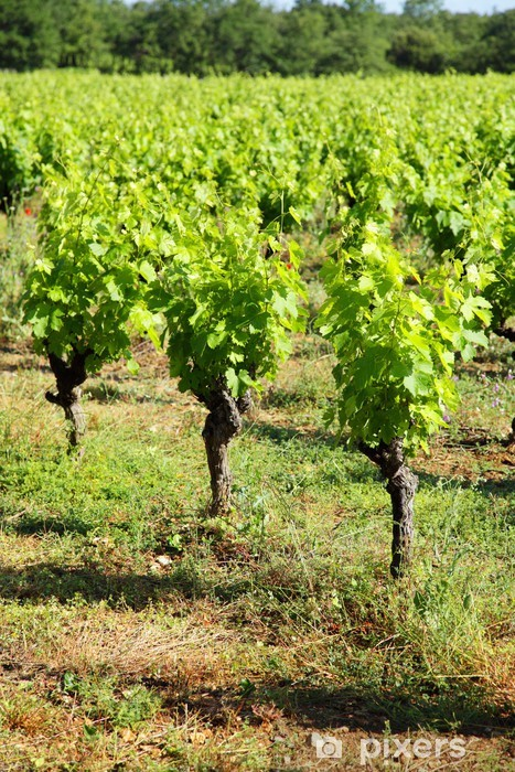Naklejka Pixerstick Grape krzak - Rośliny
