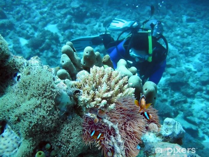 Fototapeta winylowa Błazenki - Zwierzęta żyjące pod wodą