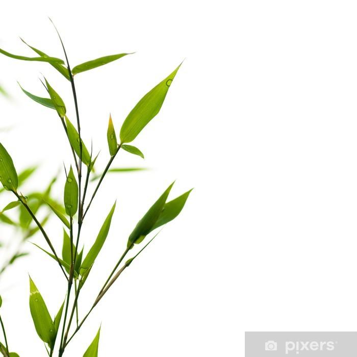 Fototapete Natur Bambus Zweig Exotische Grenze Grunes Wachstum