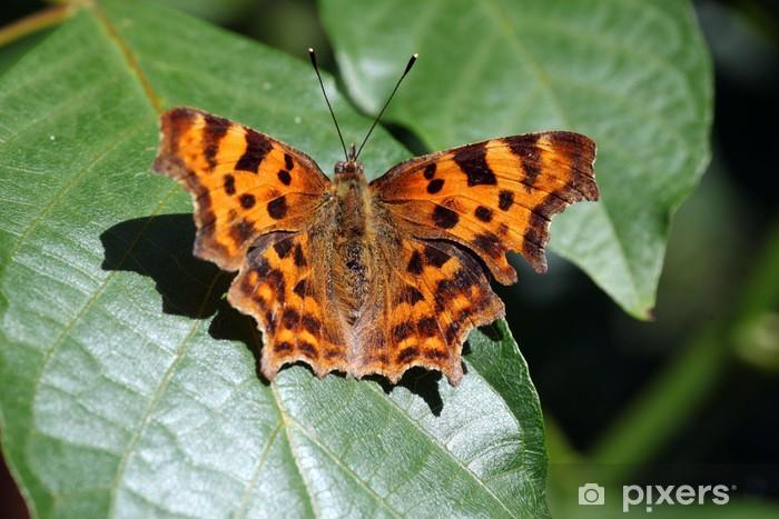 Vinyl-Fototapete Comma Butterfly - Themen