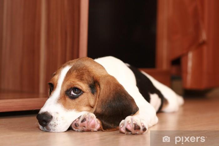 Pixerstick Sticker Beagle puppy - Zoogdieren