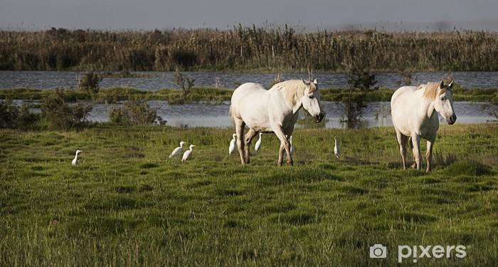 Naklejka Pixerstick Wild Horses - Ssaki