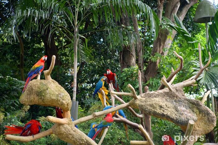 Papier peint vinyle Perroquets à la forêt tropicale. - Vacances