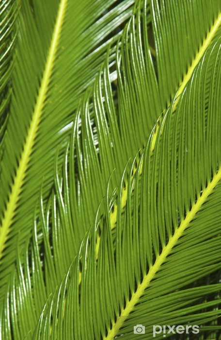 Vinyl-Fototapete Tropische Pflanze - Pflanzen