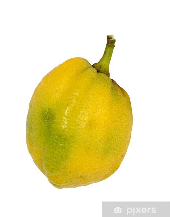 Etrog Pixerstick Sticker - Fruit