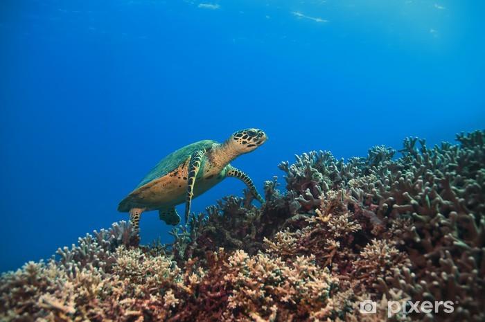 Vinylová fototapeta Green Turtle, Velký bariérový útes, Austrálie - Vinylová fototapeta