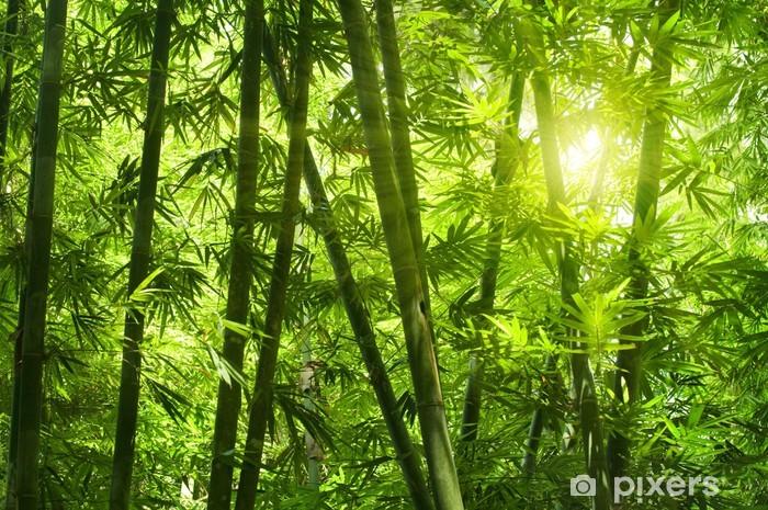 Bamboo forest. Pixerstick Sticker - Themes