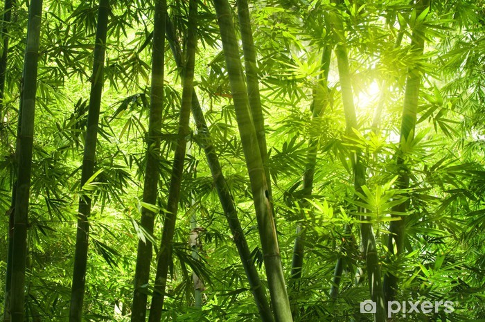 Bamboo forest. Vinyl Wall Mural - Themes