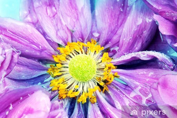 Naklejka Pixerstick Kolorowe stokrotka z kroplami deszczu - Kwiaty
