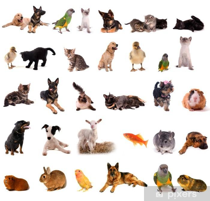 Fototapeta winylowa Zwierzęta kolaż - Ssaki
