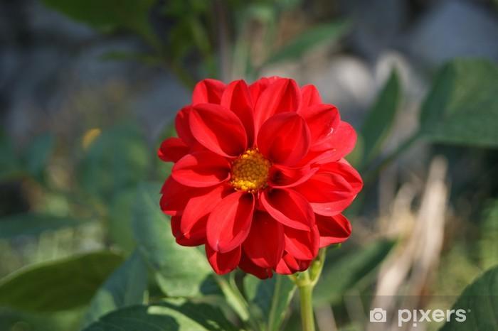 Naklejka Pixerstick Red Flower - Kwiaty