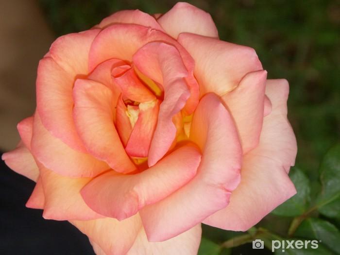 Papier peint vinyle Rose épanouie - Thèmes
