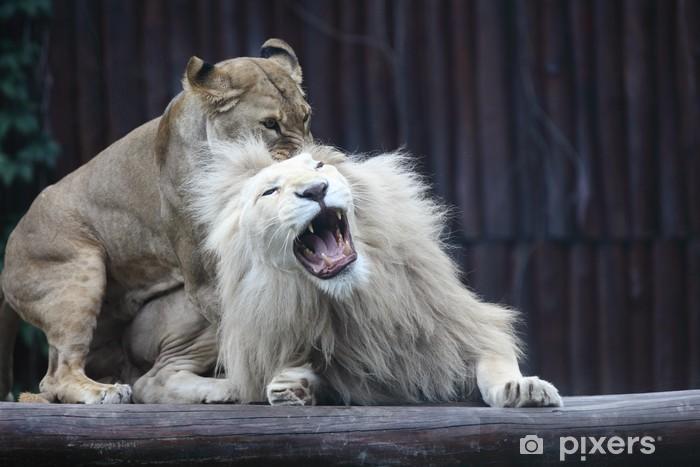be5d40f1301a5 Papier peint Le roi, lion, lionne jeu • Pixers® - Nous vivons pour ...