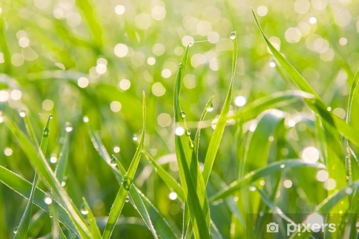 Naklejka Pixerstick Plamy światła z rosa na trawie - Rośliny
