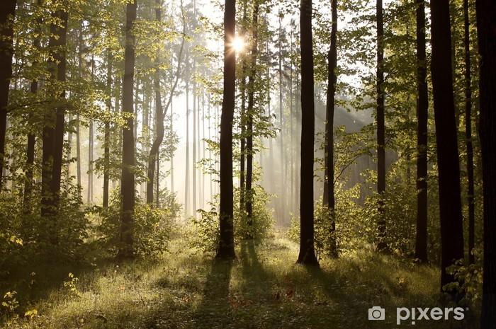 Fototapeta winylowa Promienie słońca wkradające się do lasu w mglisty poranek - Tematy