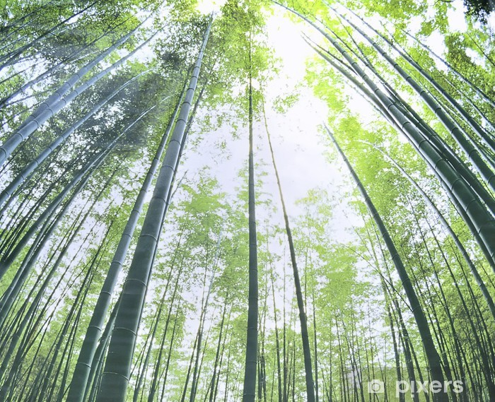 Naklejka Pixerstick Bamboo forest, Bambusoideae - Lasy