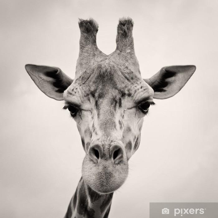 Sticker Pixerstick Image vintage de sépia d'un chef Girafes - Thèmes