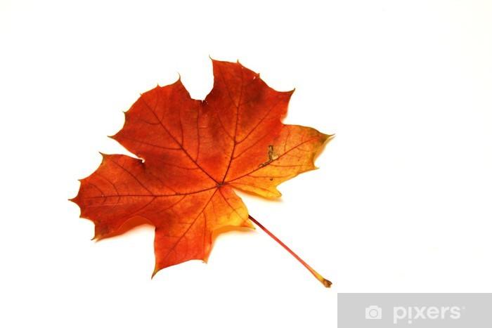 Naklejka Pixerstick Liść klonu jesienią - Pory roku