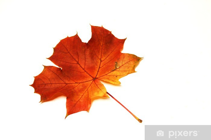 Papier peint vinyle Feuille d'érable à l'automne - Saisons