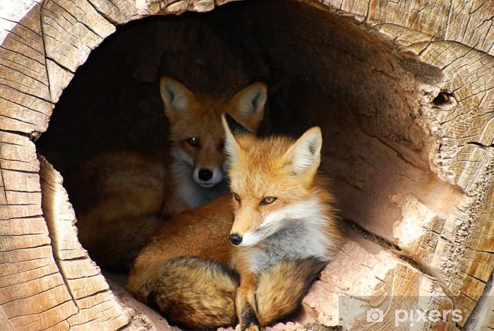 Vinyl Fotobehang Twin Fox verborgen in een holle boomstam - Het Leven