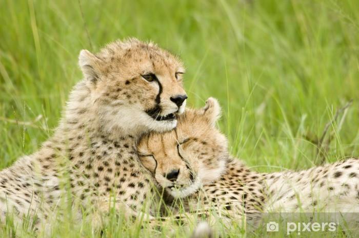 Papier peint vinyle Cheetah cubs - Afrique