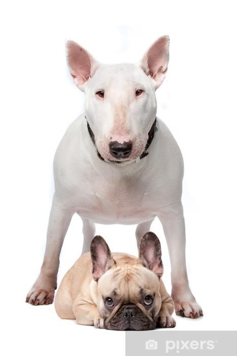 Bull terrier and French bulldog Wall Mural - Vinyl