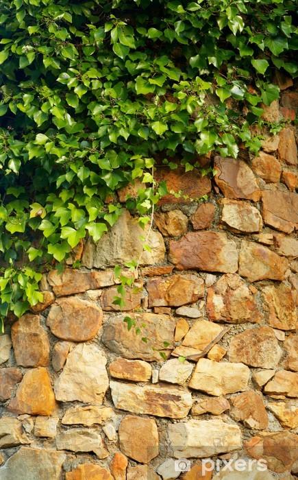Vinyl-Fototapete Efeu klettern die alte Mauer - Texturen