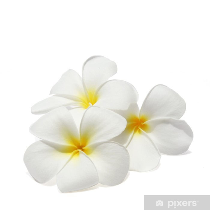 White Tropical Flowers Png
