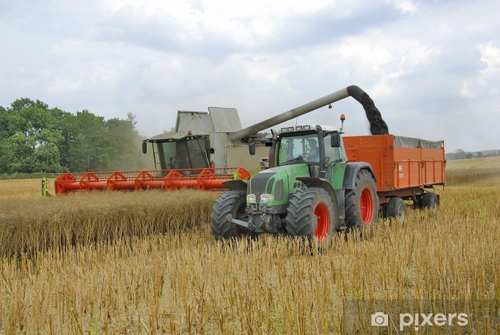 Fototapete Mähdrescher und Traktor bei der Rapsernte 130