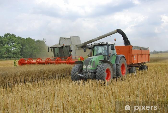 Fototapeta winylowa Kombajny zbożowe i ciągnika w czasie zbiorów rzepaku 130 - Rolnictwo