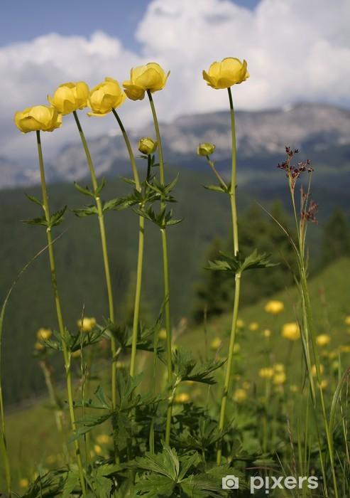 Fiori Alpini Gialli.Carta Da Parati Giallo Fiori Di Montagna Pixers Viviamo Per