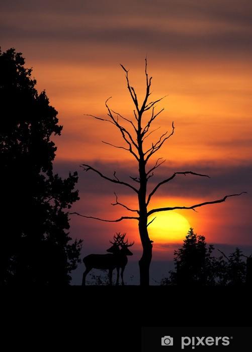Vinyl Fotobehang Cerf brame soir crepuscule soleil ombre silhouet arbre mammif - Zoogdieren