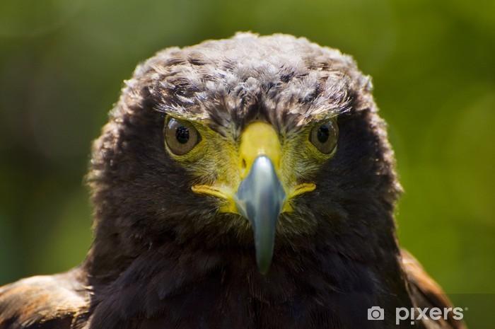 Sticker Pixerstick Harris Hawk - Oiseaux