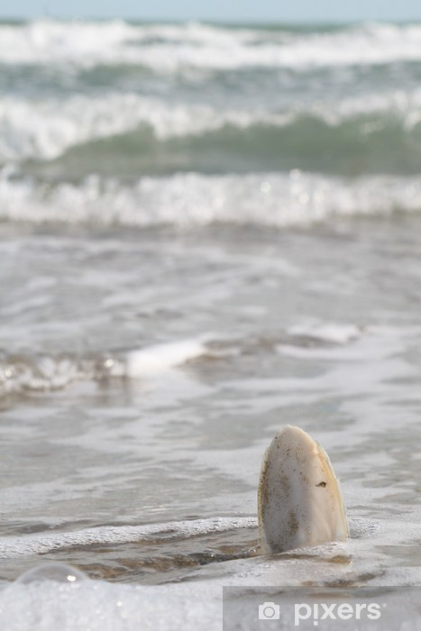 Vinyl Fotobehang Osso di Seppia in mezzo al mare - Water