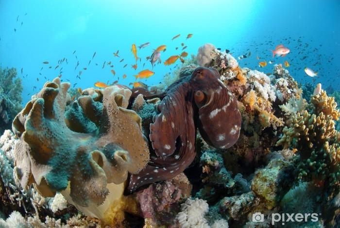 Naklejka Pixerstick Wspólna reef octopus - Zwierzęta żyjące pod wodą