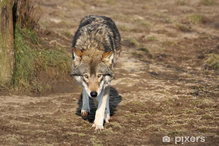 european female wolf Pixerstick Sticker - Themes