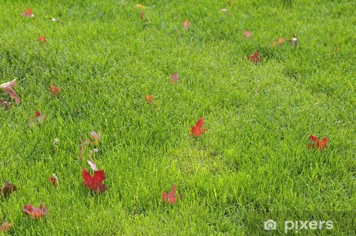 Carta Da Parati Foglie Dacero Rosso Sul Prato Verde Pixers
